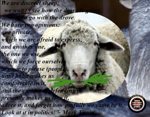 sheepo11