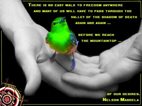 free bird2