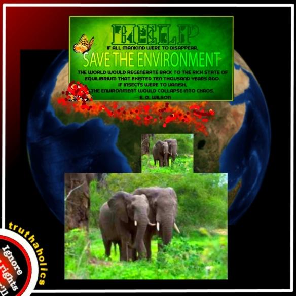 Africa Elephant Poaching